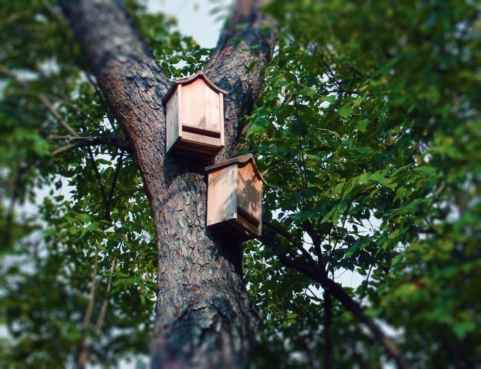 bat-boxes-1581018_1920